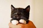 Late-20s-break-up-live-in-Scared-kitten