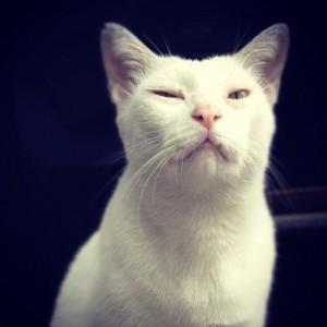 also a cat