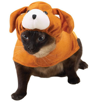 dog_costume_for_cats