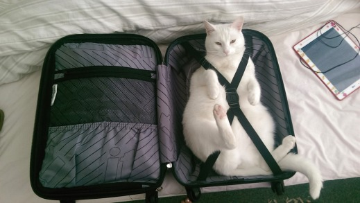 cat-in-a-suitcase