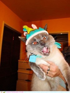 angry-cat-birthday-hat