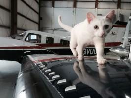 cat hangar
