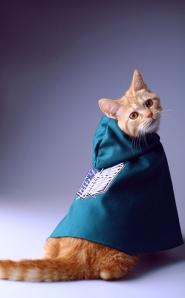 cat mantle