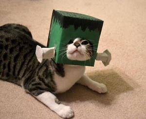 Frankencat-l1