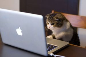 Editor cat accidentally asked the author to correct the homophobes... but he's not sorry.